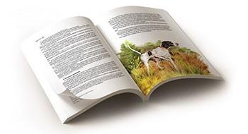 Особенности верстки книг и газет